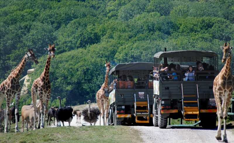 Port lympne: Aventura safari care este convenabil în Kent